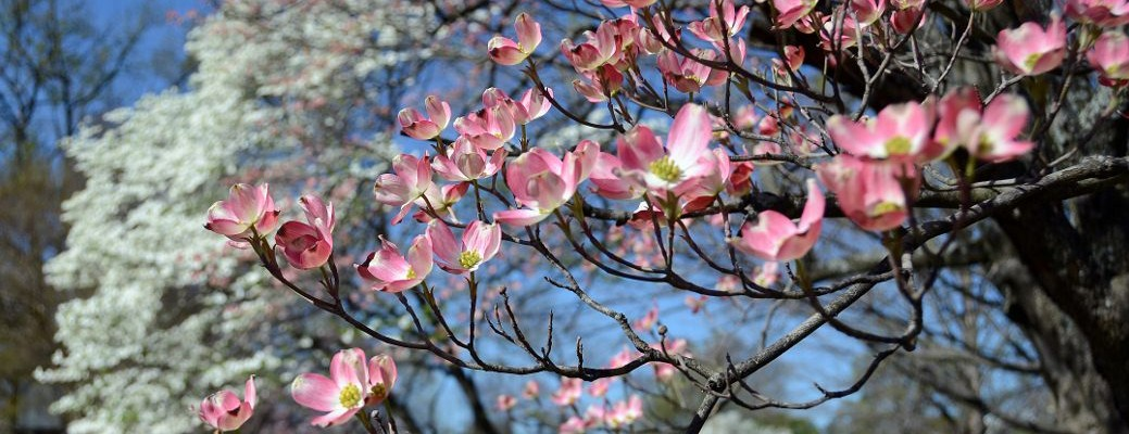 Spring in Poplar Lawn Park